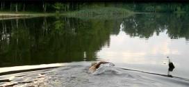 Плавание на открытой воде. Мой опыт подготовки к триатлону.